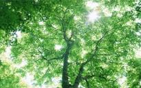 CO2削減で環境に優しい